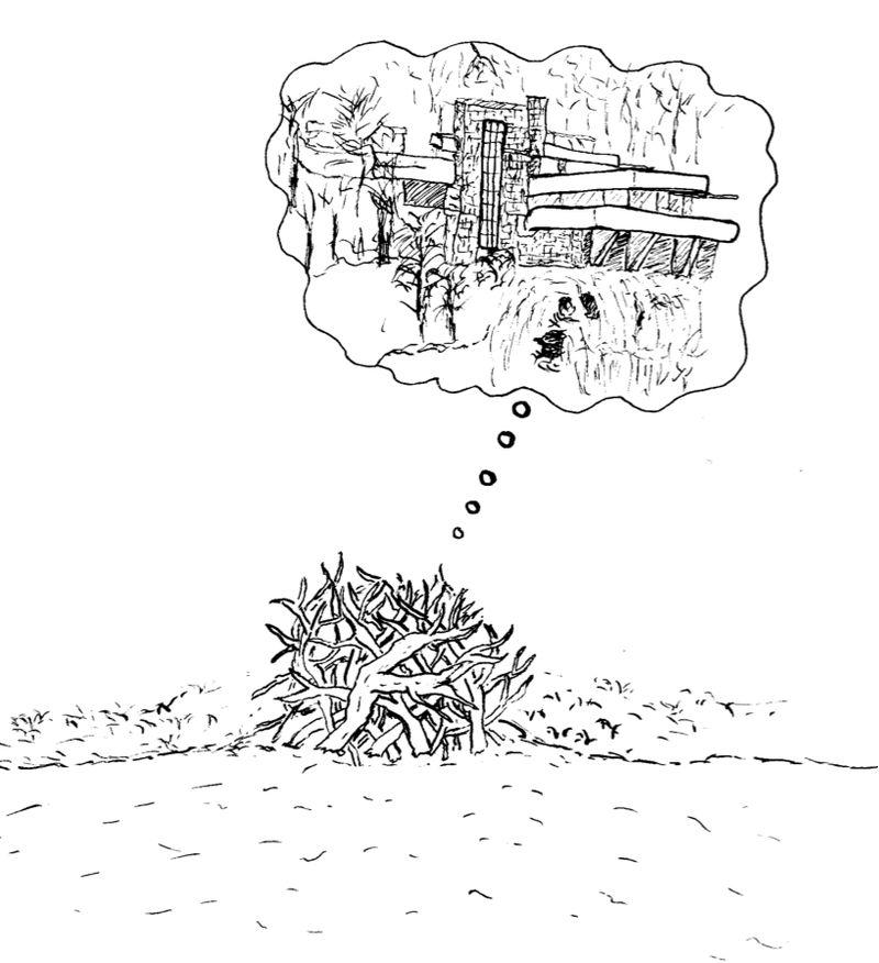 Beaverdream