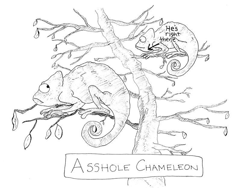 Assholechameleon