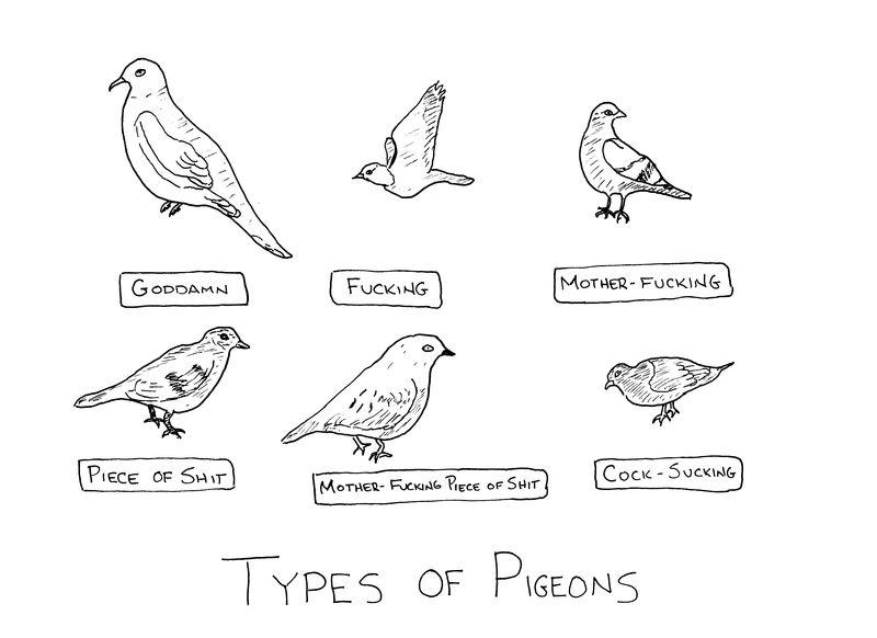 Typesofpigeons
